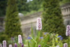 WH Gardens_DSC9753